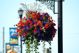 hanging flower basket in downtown