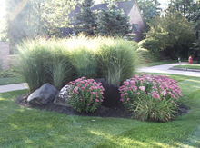 Planting with tall grasses at commerical/residential site